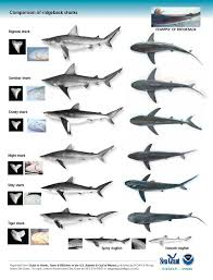types of sharks google search sharks pinterest shark