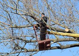 hire us for commercial tree services around fairfax va