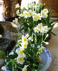 imagenes flores bellisimas flores bellisimas mundo buscar con google flores pinterest