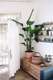 Home Plant Decor by 364 Best Indoor Plants Images On Pinterest Indoor Plants Plants