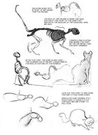 cat anatomy notes u2013 the spine