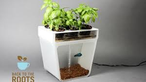 home aquaponics kit self cleaning fish tank that grows food by