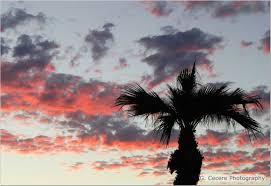 palm tree sunset snapshots from coast to coast