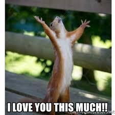 I Love You This Much Meme - i love you this much thanking squirrel meme generator