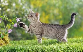 cute wallpaper cat photo 1920x1200 facts more info about cat at
