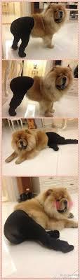 Pantyhose Meme - best of dogs wearing pantyhose meme 50 pics