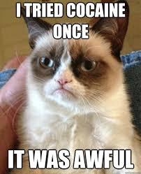 Cat Cocaine Meme - i tried cocaine once cat meme cat planet cat planet
