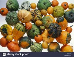 various types of ornamental gourds stock photo royalty free image