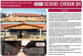Plz Bad Salzuflen Scharf Cheban Quarterhorses Plz 14532 U2022 Westernhorse Com