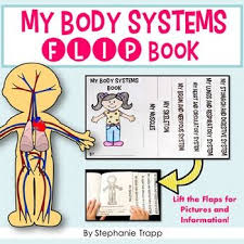 Picture Diagram Of The Human Body Best 25 Human Body Diagram Ideas On Pinterest The Human Body