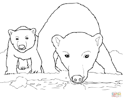 curious polar bear mother and cub coloring page free printable