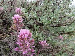 idaho native plants programs natural resources native plant communities about