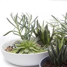 succulent kits terrarium new chive wholesale