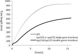 a systems model of vesicle trafficking in arabidopsis pollen tubes