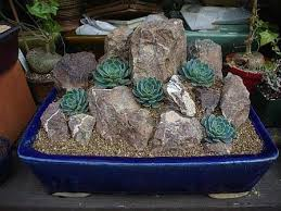 the 25 best succulent rock garden ideas on pinterest outdoor