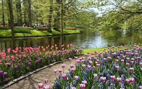 most beautiful natural flowers images flowers bouquet decoration