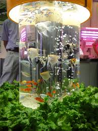 furniture 39 adorable fish tank ideas charming and bright tube