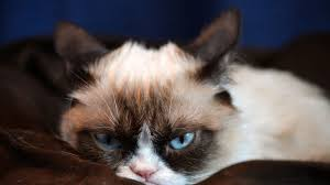 Meme Grumpy Cat - grumppuccino a look at the new coffee line by famed internet