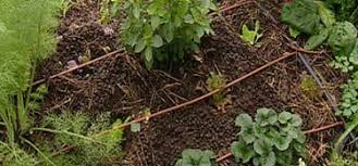 gardening australia fact sheet permaculture 6 drip irrigation