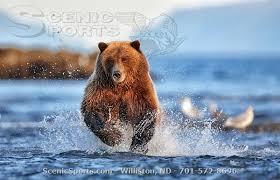 Bears Montana Hunting And Fishing - fishing hunting photos from north dakota montana