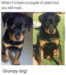Grumpy Dog Meme - when it s been a couple of years but you still mad grumpy dog