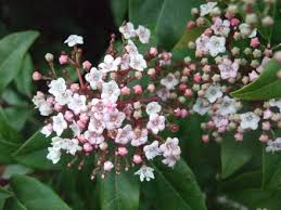 All Year Flowering Shrubs - winter interest in the garden part 2 flowers grows on you