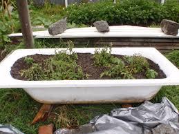 Bathtub Planter Tubbin U0027 Tomatoes Eco Thrifty Living