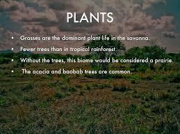 Tropical Savanna Dominant Plants - klarissa flores by klarissa flores