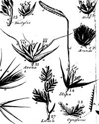 botanical sts file a botanical arrangement of plants including the uses
