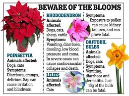the garden flowers that can kill your pet owners warned to keep