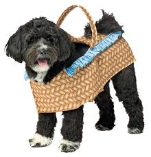 Dorothy Toto Halloween Costume Toto Wizard Oz Dorothy Carrying Toto Dog Basket Dog Costume