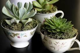 tea cup planter u2013 craftbnb