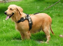 compare prices on police dog harness online shopping buy low