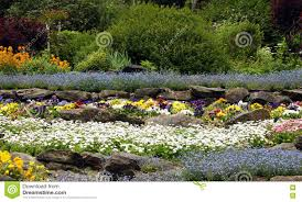 rock garden with flowering perennials stock image image 78430905