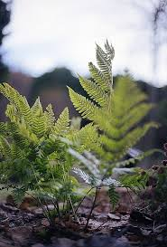 Free Picture Leaf Nature Fern Free Photo Leaf Nature Flora Tree Outdoors Free Image On