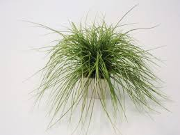 garden u0026 outdoor unique small potted plant with exciting mondo grass