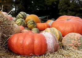 harvest thanksgiving free images fruit orange food produce vegetable pumpkin