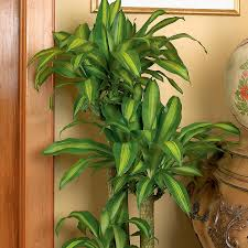 Easy House Plants Download Picture Of House Plants Solidaria Garden