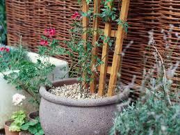 trellis designs climbing plants solidaria garden