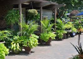 Tropical Gardening Ideas 27 Best Container Gardens Images On Pinterest Floral