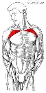 Muscles Used When Bench Pressing The Definitive Guide To Increasing Your Bench Press
