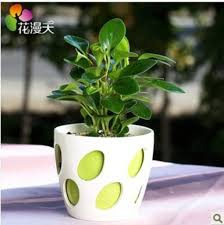Small Desk Plants Plants For Office Desk Crafts Home Regarding Small Office Desk