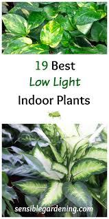 good low light plants 19 best low light indoor plants sensible gardening and living