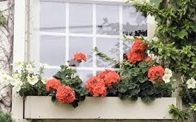 flower box balcony christmas ideas best image libraries