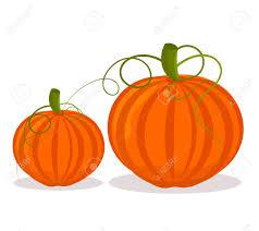 small pumpkins two pumpkins big and small white royalty free cliparts