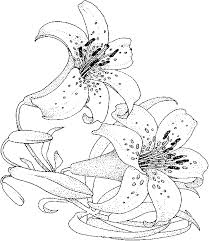 free printable coloring pages flowers vines lily flower