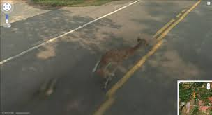 Chicago Google Maps by Streetviewfun Google Street View Kills Bambi