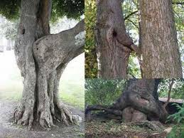 some strange trees you got to see pictures agriculture nigeria