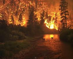 North Carolina forest images Forest fire danger increasing in western north carolina says jpg