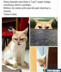 Gato Meme - gato do doutor garra meme by andreskywalker memedroid